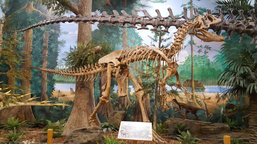 Cocoa Beach Museum of Dinosaurs skeleton on display